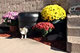 New and Improved for 2016-The Kitty Tube Gen. 3 -Outdoor Insulated Cat House with Custom Pet Pillow