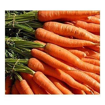 "Carrots""Little Fingers"" Petite Seeds (50 Seeds) : Garden & Outdoor"