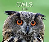 img - for Owls 2018 book / textbook / text book