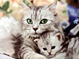 Cat Broad Spectrum (2 in 1) extra strength Dewormer Tuna flavored for Tapeworms Round and Hook worms each capsule contains 35mg Praziquantel and 35mg Pyrantel + Get FREE capsules when ordering 2 or more orders and NO DOUBLING in shipping charges.Now FREE SYRINGE included., My Pet Supplies
