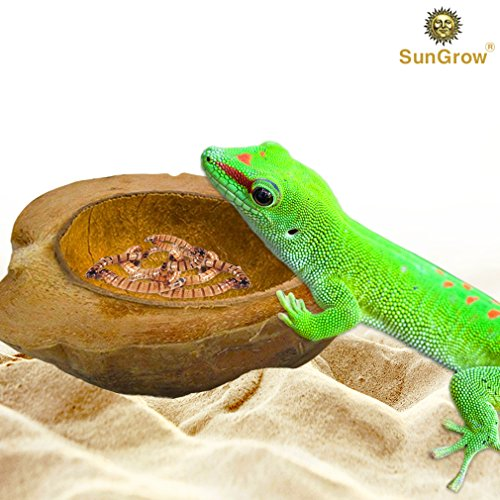 Reptile Food Bowl - Unbreakable Half Coconut Shell with Husk - Prevents Spillage & Movement - 100% Natural - Tank Décor and Humidifier - for Bearded Dragons, Tortoise, Snakes, Bullfrogs