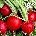 Early Scarlet Globe Radish Seeds - 200 Seeds NON-GMO