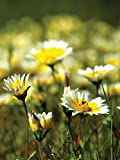 Pollinator Mix - California Wildflowers 5 LB
