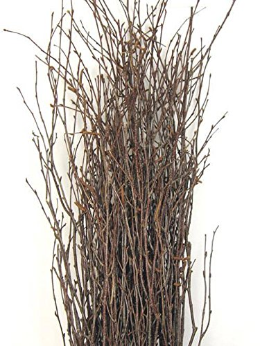 Richland Natural Birch Branches 3-4 Feet (25 Branches)
