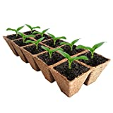 Seed Starter Peat Pots Kit | Germination Seedling