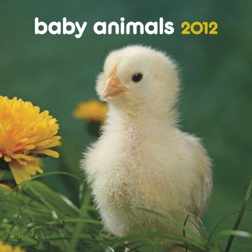 Read Online Baby Animals 2012 7X7 Mini Wall Calendar ebook