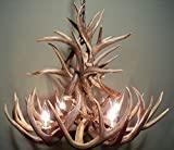 REAL WHITETAIL DEER ANTLER CHANDELIER, 4 LIGHTS, SHED ANTLER ART, ELK COVERED SOCKETS HANDMADE 23''wide x 19'' tall