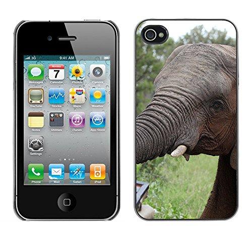 Premio Sottile Slim Cassa Custodia Case Cover Shell // F00015696 l'éléphant // Apple iPhone 4 4S 4G