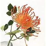 jiumengya-10pcs-Plastic-Dandelion-Flower-Single-HeadPiece-Leucospermum-cordifolium-Artificial-Flowers-1772-Long-Fake-Hydrangea-Flowers-Orange