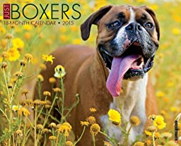 Just Boxers 2015 Wall Calendar