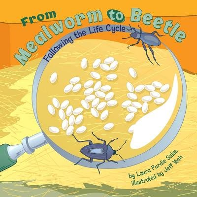 From Mealworm to Beetle( Following the Life Cycle)[FROM MEALWORM TO BEETLE][Library (Mealworm Life Cycle)