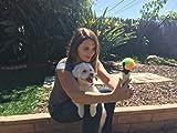 Pooch Selfie: The Original Dog Selfie Accessory