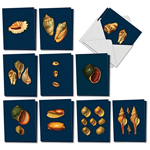 (Spectacular Shells : 20 Assorted Blank All Occasions Cards Presenting Vivid and Striking Shell Displays, with Envelopes. AM7040OCB-B2x10)