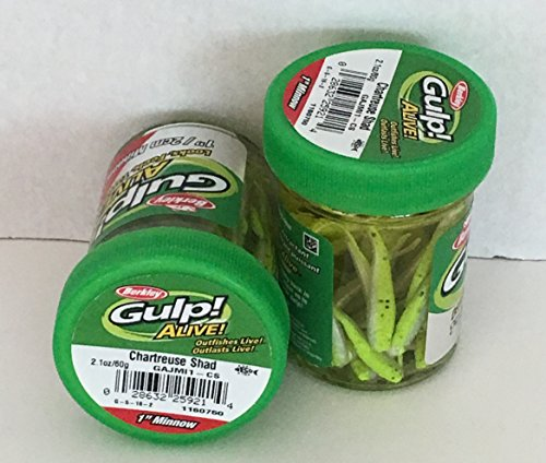 - GULP Bait 1 INCH CHARTREUSE SHAD MINNOW 2 jar bundle BERKLEY gulp Alive perch minnows ice fishing bait Panfish minnows