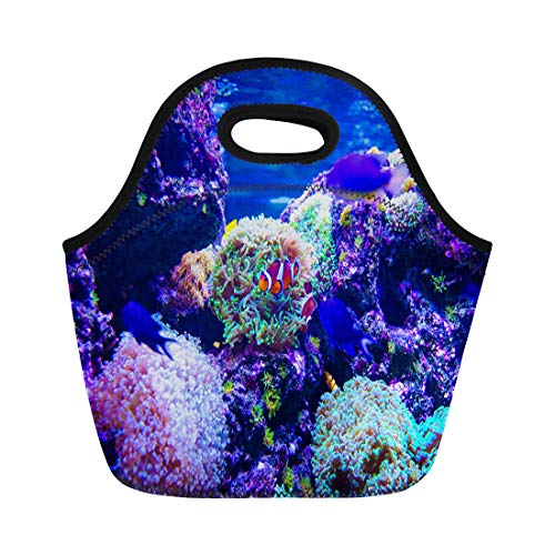 - Semtomn Lunch Tote Bag Tropical Colorful Sea Fish Underwater Great Variety of Reusable Neoprene Insulated Thermal Outdoor Picnic Lunchbox for Men Women