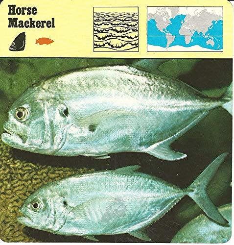 1975 Editions Rencontre, Animals Card, 04.85 Horse Mackerel