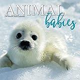 Animal Babies 2020 Wall Calendar