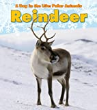 Reindeer (A Day in the Life: Polar Animals)