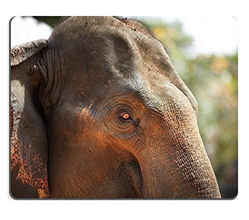 象のふくらはぎ用マウスパッド 260*210*3 mm B07L9D64LJ Fl14 300*250*3 mm 300*250*3 mm|Fl14