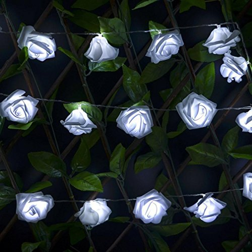 YJM 2 10 LED Romantic Rose String Lights For Bedroom Xmas Wedding Party WH by YJM (Image #4)