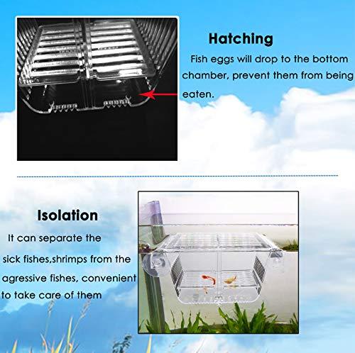 Buy breeding box for fish tank