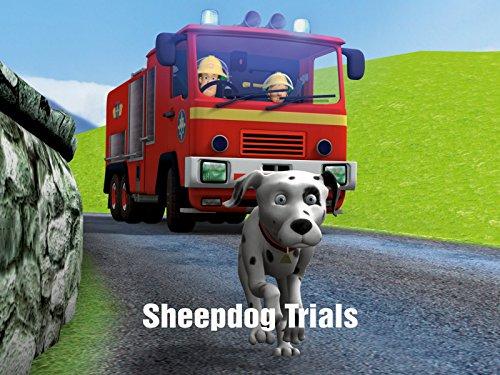 Heroic Animal (Sheepdog Trials)