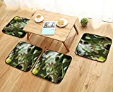 UHOO2018 Modern Chair Cushions Cashew nut Flowers Anacardium occidentale l Convenient Safety and Hygiene W23.5 x L23.5/4PCS Set