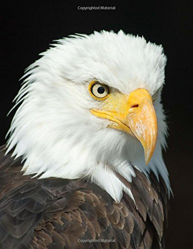 Eagle Notebook: Bald Eagle Composition Book (Journal, Log Book, Diary, Creative Writing, School, Poetry) (8.5 x 11