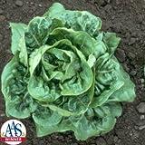 Lettuce Buttercrunch Seeds - Pelleted Seed - Vegetable Seeds Package - 1 LB. Package
