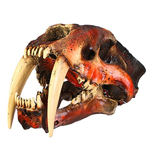 - Gmasking Resin Smilodon Sabertooth Tiger 1:1 Skull Model Replica(No Display Stand)