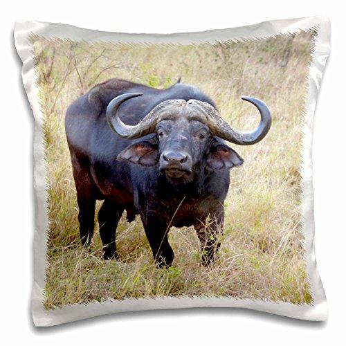 3dRose South Africa, Zulu Nyala GR, Cape Buffalo-AF42 LEN0176 - Lisa S. Engelbrecht - Pillow Case, 16 by 16-inch (pc_70866_1) ()