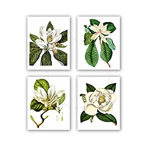 Magnolia flowers vintage botanical wall art for Decorate with flowers amazon