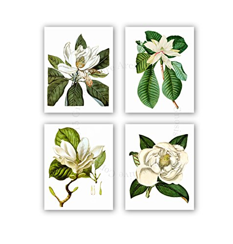 Magnolia Flowers Vintage Botanical Wall Art Unframed Set of 4 Wall Art Prints Home Decor