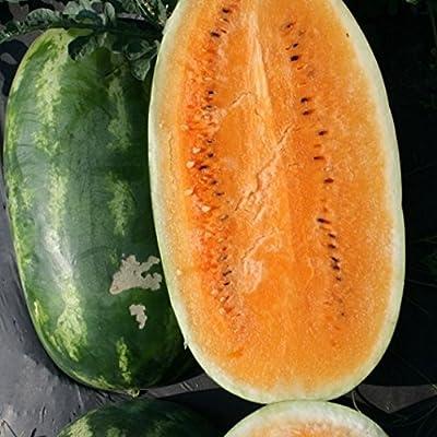 Watermelon 'Tender Sweet Orange' (Citrullus Lanatus) Fruit Plant Heirloom, 10 Seeds : Garden & Outdoor