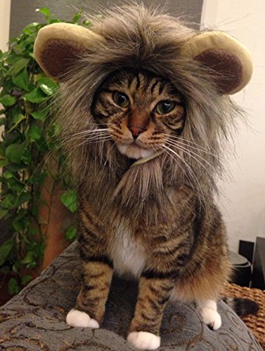 [Itplus Pet Cosplay Costume Adjustable Lion Mane Wig Hat for Cat or Small Dog Puppy Hair Accessories Dress up with Ears Christmas Party] (Hat Costumes Accessory)