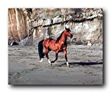 Arabian Horse Wall Decor Running on Beach Animal Art Print Poster (16x20)