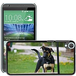 Cases for cellphone Etui Housse Coque de Protection Cover Rigide pour//M00135316 La agilidad del perro de perrito//HTC Desire 820