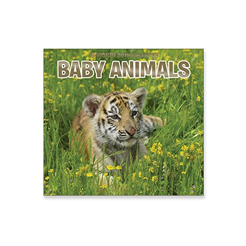 16 Month Wall Calendar 2019 Baby Animals. Each Month Displays Full-Color Photograph. September 2018 - December 2019 Planning Calendar
