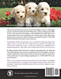 The Poodle Handbook: The Essential Guide to