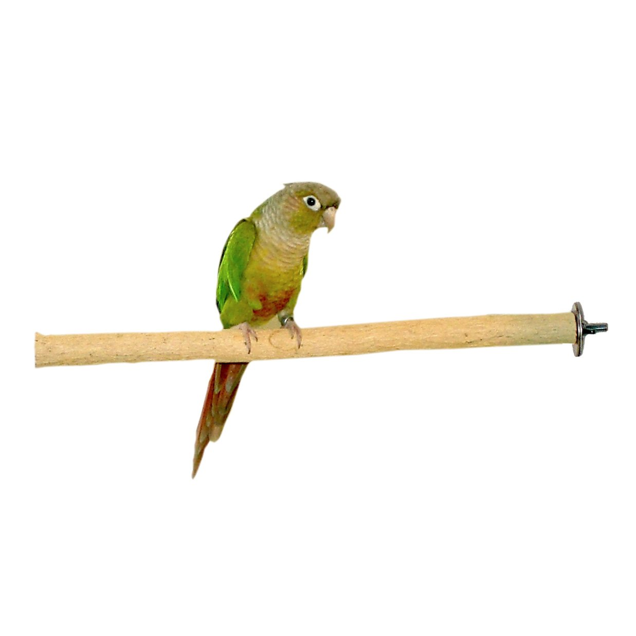 Birds LOVE Bottlebrush Wood Bird Cage Perch