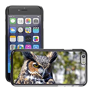 Super Stellar Slim PC Hard Case Cover Skin Armor Shell Protection // M00125957 Owl Bird Ave Night Bird Of Prey // Apple iPhone 6 PLUS 5.5""