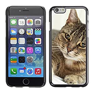 Super Stellar Slim PC Hard Case Cover Skin Armor Shell Protection // M00125962 Portrait Cat Feline Animal // Apple iPhone 6 PLUS 5.5""