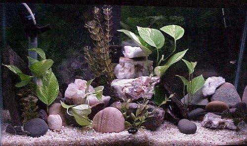 Amazon Com 12 Pc River Rock Organic Aquarium Cave Rock Decoration Aquarium Aquascape Diy Kit Aquarium Safe All Natural Stone Organic Terrarium Iwagumi Aquarium Cichlid Cave Pleco Cave Aquarium Decor Ornaments
