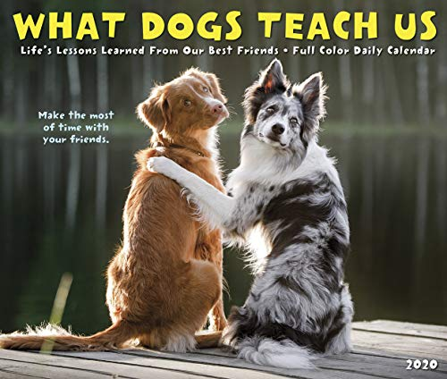 What Dogs Teach Us 2020 Box Calendar