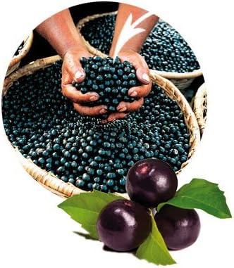 acai berry detox u0026 curățare eficientă a colonului