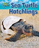 Sea Turtle Hatchlings, Ruth Owen, 1617726036