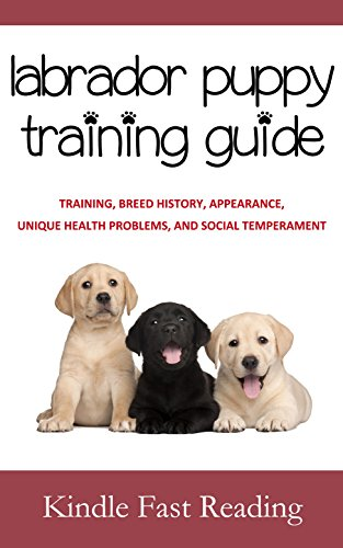 labrador-puppy-training-guide-training-breed-history-appearance-unique-health-problems-and-social-te