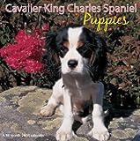 Cavailer King Charles Spaniel Puppies 2008 Calendar