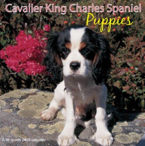 Cavailer King Charles Spaniel Puppies 2008 Calendar (Calendar Puppies 2008)