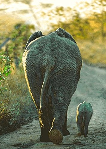3D Motion Lenticular Postcard - AFRICAN ELEPHANT and CALF - Wild Animals - 4x6 Greeting Card
